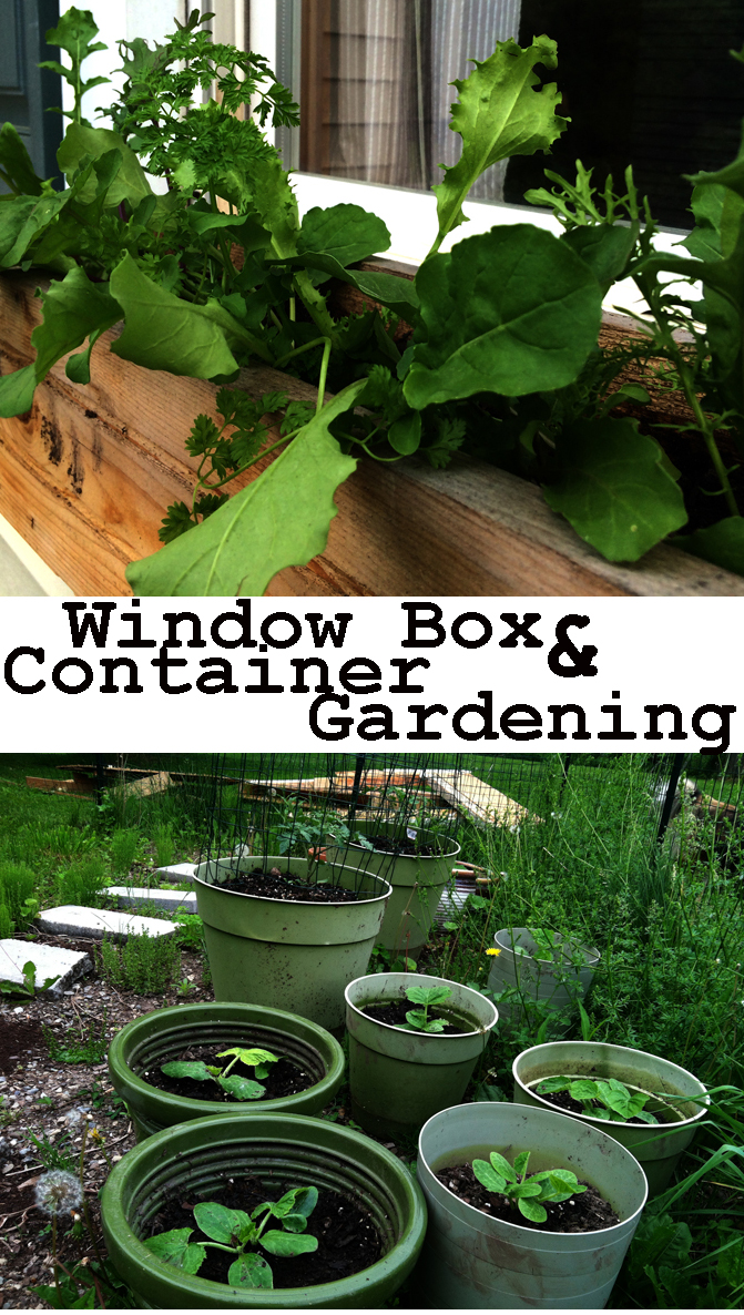 Window box and container gardening for movers and shakers. Need to be able to move your garden around? Here's your solution!